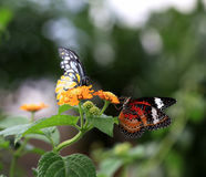 蝴蝶二 库存照片
