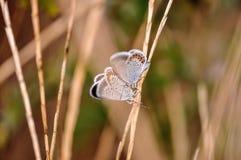 蝴蝶二 库存图片