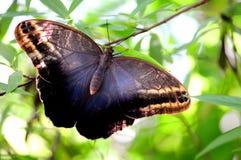 蝴蝶休息 库存照片