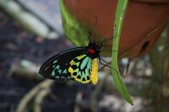 蝴蝶佛罗里达世界 免版税库存图片