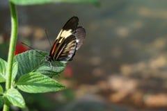 蝴蝶佛罗里达世界 库存照片