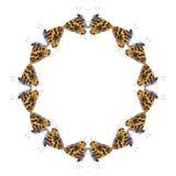 蝴蝶几何形状在白色背景的看起来象害处 免版税图库摄影