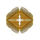 蝴蝶几何形状在白色背景的看起来象害处 库存照片