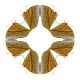 蝴蝶几何形状在白色背景的看起来象害处 免版税库存图片