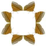 蝴蝶几何形状在白色背景的看起来象害处 图库摄影