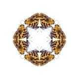 蝴蝶几何形状在白色背景的看起来象害处 库存图片