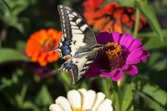 蝴蝶吃 免版税图库摄影