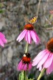 蝴蝶和土蜂在花 免版税库存图片