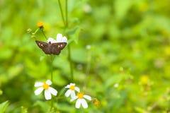 蝴蝶和开花 免版税库存照片