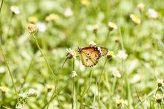 蝴蝶和禾本科 库存图片
