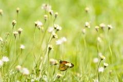 蝴蝶和禾本科 图库摄影