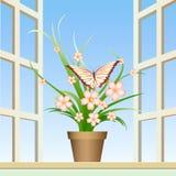蝴蝶和窗口植物 库存照片