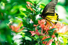 蝴蝶和红色花在泰国的公园 免版税库存照片