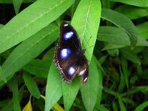 蝴蝶和自然 免版税库存图片