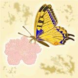 蝴蝶和花作为板刻葡萄酒传染媒介 库存图片