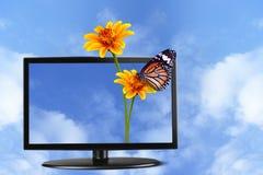 蝴蝶和花在电视上 库存图片