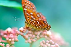 蝴蝶和花 免版税库存照片