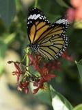 蝴蝶和花 图库摄影