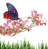 蝴蝶和花 免版税库存图片
