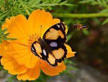 蝴蝶和蜂 免版税库存照片