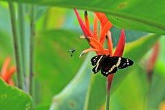 蝴蝶和飞行在花 免版税库存图片