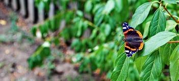 蝴蝶和绿色叶子 库存图片