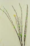 蝴蝶图片和四背景白色树 库存照片