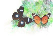 蝴蝶图表 免版税库存图片