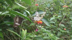 蝴蝶圣所 库存图片