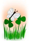 蝴蝶在三叶草草甸 免版税库存图片