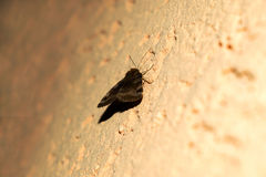 蝴蝶在墙壁上站立 免版税库存照片