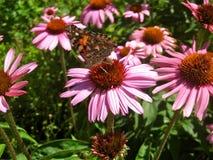 蝴蝶在夏天庭院里 免版税库存图片