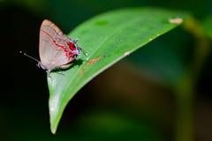 蝴蝶在密林 库存图片