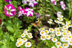 蝴蝶在庭院里 图库摄影