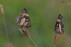 蝴蝶在庭院里 库存照片