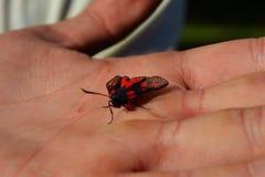 蝴蝶在手中 免版税库存照片
