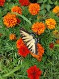 蝴蝶在明亮地色的花庭院里  库存照片