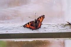 蝴蝶在窗口的房子里 库存图片