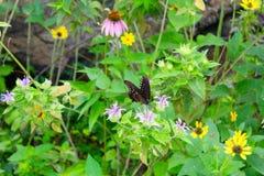 蝴蝶在花床上 图库摄影