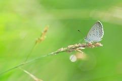 蝴蝶在草栖息有被弄脏的背景 免版税图库摄影