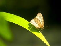 蝴蝶在阳光下 免版税库存图片