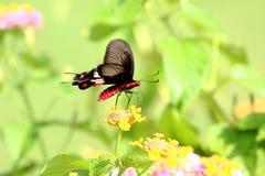 蝴蝶在绿色背景中 免版税库存照片