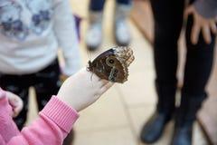 蝴蝶坐一只人的手 库存照片