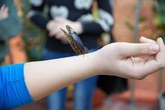 蝴蝶坐一只人的手 免版税图库摄影
