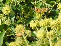 蝴蝶坐一朵花在一个晴天 背景 纹理 库存图片