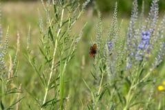 蝴蝶坐在领域的一朵花 图库摄影