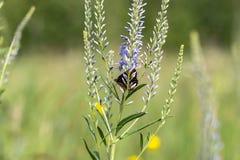 蝴蝶坐在领域的一朵花 免版税库存照片