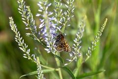 蝴蝶坐在领域的一朵花 免版税库存图片