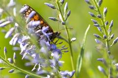 蝴蝶坐在领域的一朵花 库存照片