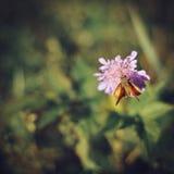 蝴蝶坐在绿色背景的一朵桃红色花在太阳 免版税图库摄影